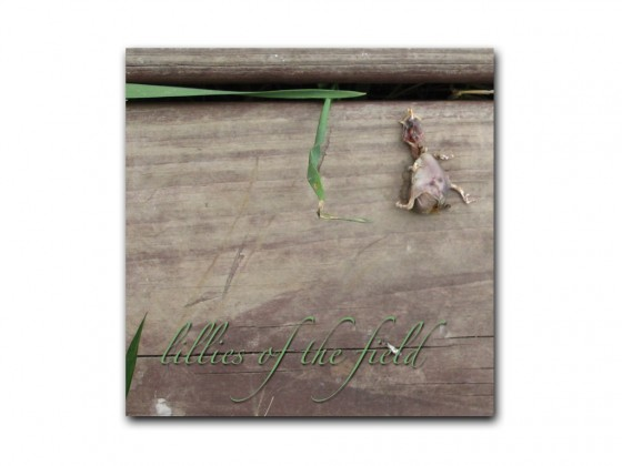 the NEP – Lilies of the Field (CD cover)