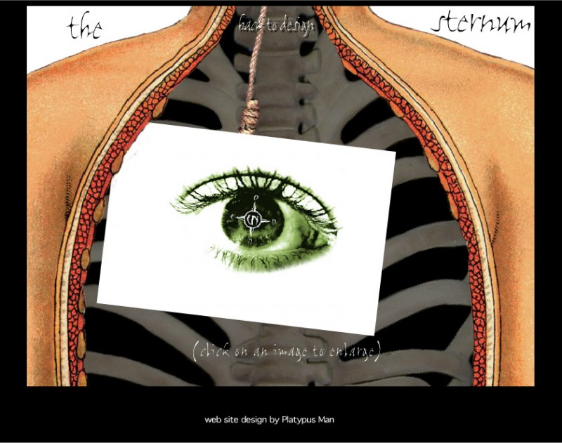 thesternum-design-sample